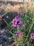 sehr reizende Blume Stockfoto
