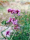 sehr reizende Blume Stockbilder
