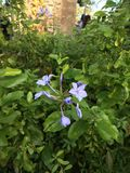 sehr reizende Blume Lizenzfreie Stockbilder