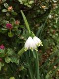 sehr reizende Blume Stockbild