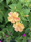 sehr reizende kleine Blume Stockfotos