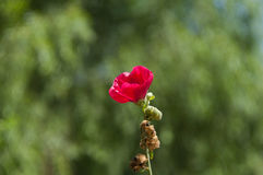 Sehr schöne Blume Stockbild