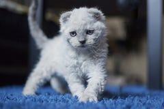 Sehr schöne kleine Miezekatze Stockfotos