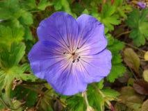 Sehr schöne purpurrote Blume 1 lizenzfreie stockfotos