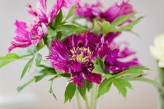 Sehr schöne rosa Pfingstrosen gemacht in einem Blumenstrauß Stockfotografie