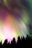 Auroraen über dem Wald Lizenzfreies Stockfoto