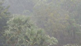 Sehr starke tropische Regenschauerwand Palmen und Bäume im Regen stock video footage