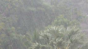 Sehr starke tropische Regenschauerwand Palmen und Bäume im Regen stock footage