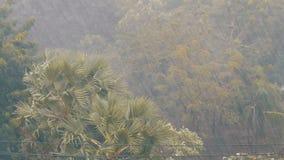Sehr starke tropische Regenschauerwand Palmen und Bäume im Regen stock video