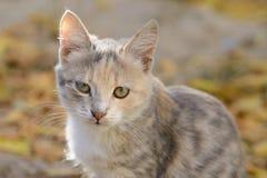 Sehr trauriges Kätzchen Stockfotos