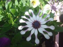 Sehr ungewöhnliche Blume 1 lizenzfreies stockfoto