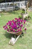 Sehr ungewöhnliche Blumen-Anordnung im Vorgarten Stockfoto