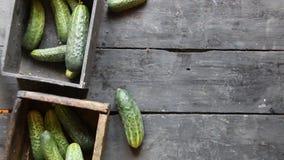sehr viele Fleischmehlklöße Gesunde Ernährung, Lebensmittel, Nähren und vegetarisches Konzept Grüne Gurken stock footage