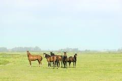 Sei cavalli in un prato verde Immagini Stock Libere da Diritti