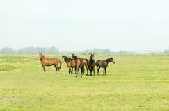 Sei cavalli in un prato verde Fotografia Stock Libera da Diritti