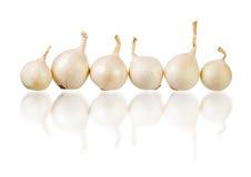 Sei cipolle bianche sopra fondo bianco Fotografie Stock