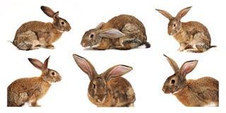 Sei conigli su una priorità bassa bianca Immagine Stock Libera da Diritti