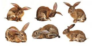 Sei conigli su una priorità bassa bianca Immagini Stock Libere da Diritti