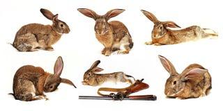 Sei conigli su una priorità bassa bianca nel foregroun Fotografia Stock Libera da Diritti