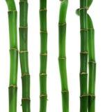 Sei gambi di bambù Fotografie Stock Libere da Diritti