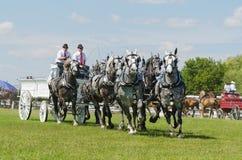 Sei gruppi del legamento di cavallo di Grey Percherons a paese Fotografie Stock