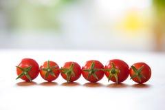 Sei pomodori in una fila davanti ad un fondo confuso bianco blu e di verde Fotografie Stock Libere da Diritti