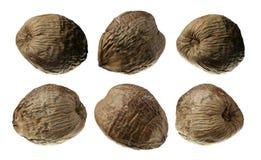 Sei raccolte delle noci di cocco isolate su bianco Fotografia Stock Libera da Diritti
