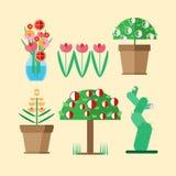 Sei specie di piante coltivate domestiche Fotografie Stock
