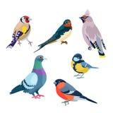Sei uccelli di seduta Immagine Stock