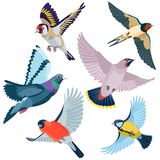 Sei uccelli di volo Immagini Stock
