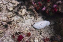 Seiches à l'île de Lipe photo libre de droits