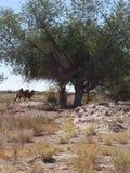 Seien Sie Patient und wie ein Kamel ruhiges! lizenzfreies stockbild