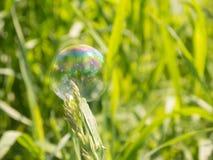 Seifenblase auf Grasrasen Lizenzfreies Stockbild