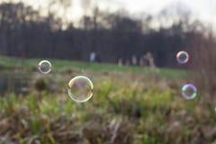 Seifenblasen in der Natur Stockfotografie