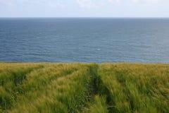 Seigle irlandais grandissant par l'océan Photographie stock