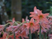 Seil-Rot-Blumen Stockbilder