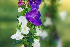 Seil wird mit Blumen verziert Der Plan Stockfotos