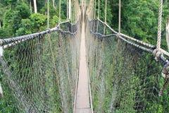 Seilzug-gebliebene Brücke in den Baumkabinendächern, Afrika Lizenzfreie Stockfotografie