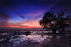 Schattenbild des Baums und des Sonnenuntergangs auf stillem Strand Lizenzfreie Stockbilder