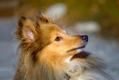 Sein eine Hundelebensdauer Stockfoto
