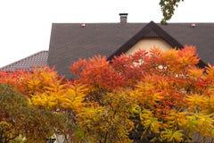 Seine Blätter haben eine wunderbare Färbung des Herbstes, die Farben überschreiten glatt von Gelb zu Hochrot lizenzfreie stockfotografie