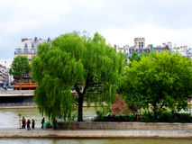 Seine river and the Cite island Royalty Free Stock Photography