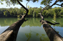 Seine river front of Fontainebleau forest stock images