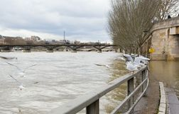 Seine river inundation in Paris Royalty Free Stock Image