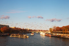 Seine river, Paris, France. Royalty Free Stock Photo