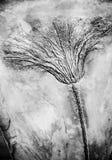 Seirocrinus-subangularis versteinert stockfotos
