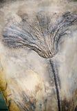 Seirocrinus-subangularis versteinert stockfoto