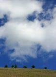 Seis árvores e uma skyline imagem de stock
