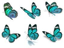 Seis borboletas de monarca ajustadas Fotografia de Stock Royalty Free