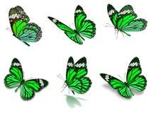 Seis borboletas de monarca ajustadas Fotos de Stock Royalty Free